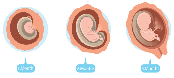 Third Month Pregnancy: Baby Development, Ultrasound And