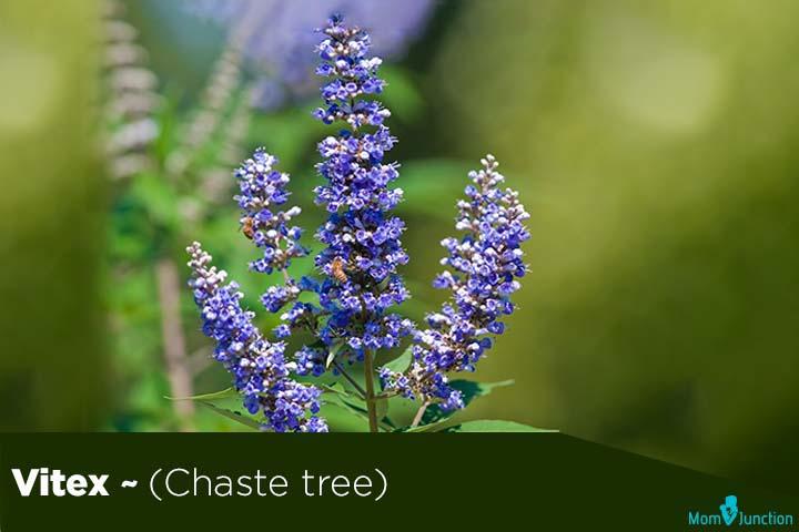Vitex (Chaste tree)