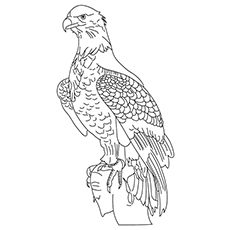 Wedge Tailed Eagle Coloring Page