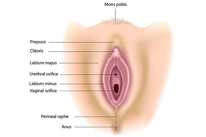 What Is The Perineum