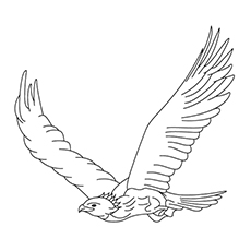 Coloring Page of White Tailed Eagle Flying High