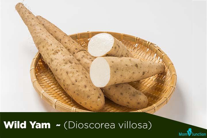 Wild-Yam-Dioscorea-villosa-1