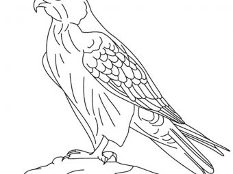 10 Printable Falcon Coloring Pages For Toddlers