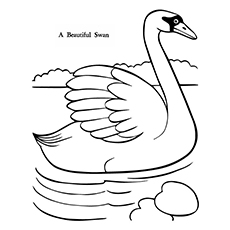 Swan Coloring Pages - A Beautiful Swan