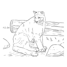 Panther Coloring Pages - A Black Panther Near A Log