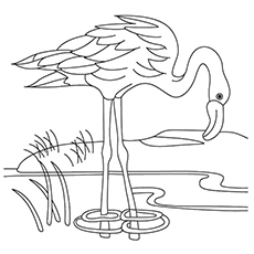 flamingo coloring pages a flamingo drinking water from the lake - Flamingo Coloring Pages