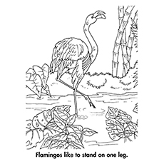 flamingo coloring pages a flamingo standing on one leg - Flamingo Coloring Pages