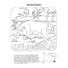 Panther Coloring Pages - A Florida Panther