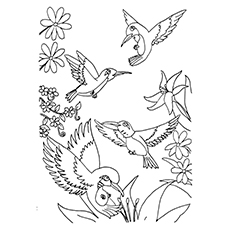 Hummingbird Coloring Pages - A Group Of Hummingbirds