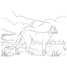 Panther Coloring Pages - A Majestic Panther