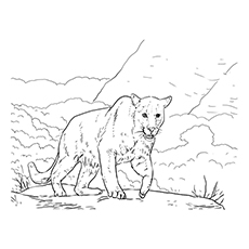 panther coloring pages a panther taking a stroll