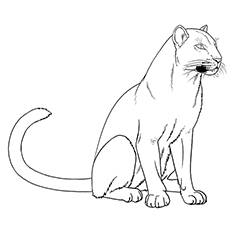 Panther Coloring Pages - A Simple Panther Coloring Page