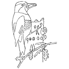 Top 10 Woodpecker Coloring Pages For Toddlers