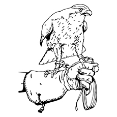 Falcon Coloring Pages - American Kestrel