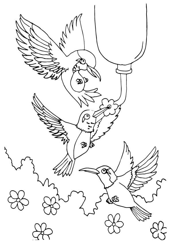 Anna%E2%80%99s-Hummingbird