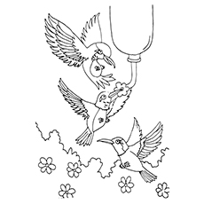 Hummingbird Coloring Pages - Anna's Hummingbird