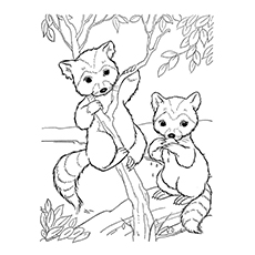 Raccoon Coloring Page - Baby Raccoons Climbing The Tree
