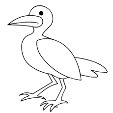 Seagull Coloring Page - Baby Seagull