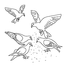 Tippler Pigeon Coloring Page. Band Tailed Pigeon 16
