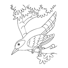Hummingbird Coloring Pages - Black-Chinned Hummingbird