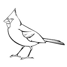 Cardinal Coloring Page - Black Faced Grosbeak
