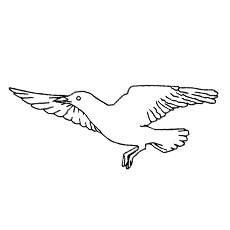 Seagull Coloring Page - Black-Tailed Gull
