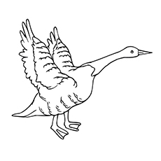 Brent Goose Coloring Page