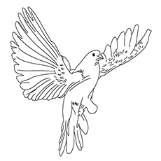 Brown Cuckoo Dove Coloring Page
