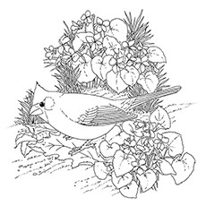 Cardinal Coloring Page - Cardinal Sitting In A Shrub