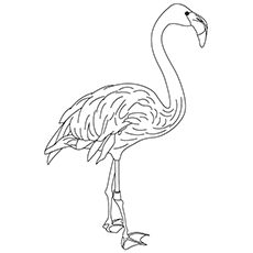 top 10 flamingo coloring pages for toddlers - Flamingo Coloring Page