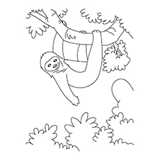 Sloth Coloring Page - Cartoon Sloth