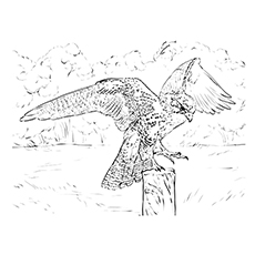 Falcon Coloring Pages - Collared-forest Falcon