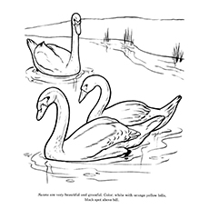 Swan Coloring Pages - Color By Instruction Swan