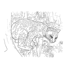 Top 10 Cougar Coloring Pages Your Toddler Will Love To Color