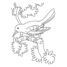 Crow Coloring Page - Crow Perching On A Branch