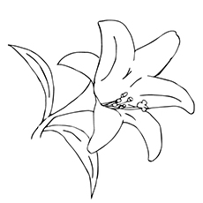 Lily Coloring Pages - Desert Lily