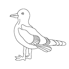 Seagull Coloring Page - Dolphin Gull