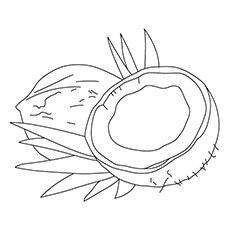 Coconut Coloring Page - Dwarf Coconuts