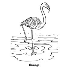 flamingo coloring pages flamingo - Flamingo Coloring Page