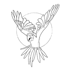 Macaw Coloring Page - Green-Winged Macaw