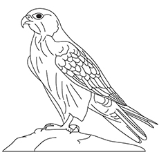 Falcon Coloring Pages - Gyrfalcon