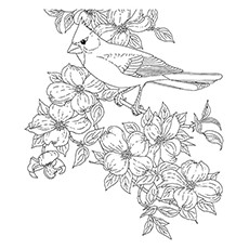 Cardinal Coloring Page - Hepatic Tanager