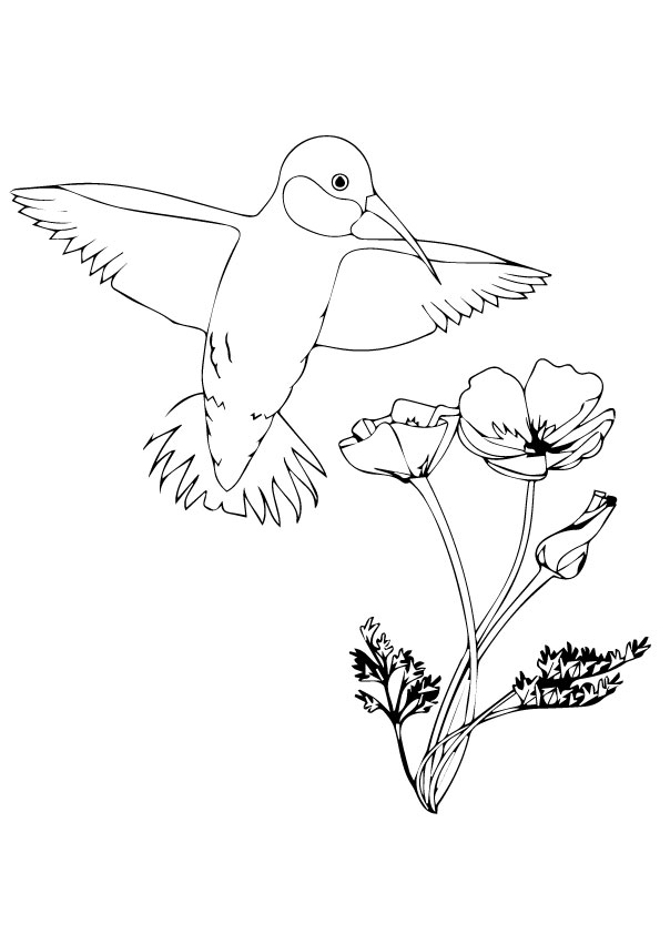 Hopping-Hummingbird