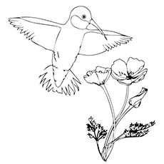 Hummingbird Coloring Pages - Hopping Hummingbird