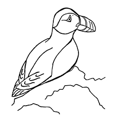 Horned Puffin Pic to Color