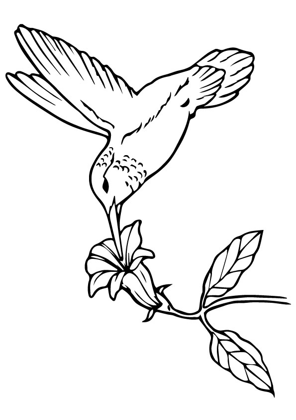 Hummingbird-Sipping-Nectar