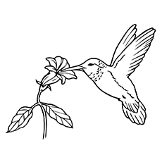 Hummingbird Coloring Pages - Hummingbird Sipping Nectar