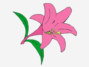 10 Beautiful Lily Coloring Pages For Your Little Girl