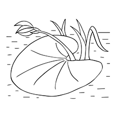Lily Coloring Pages - Lily Pad