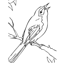 Long Tailed Mockingbird Coloring Page